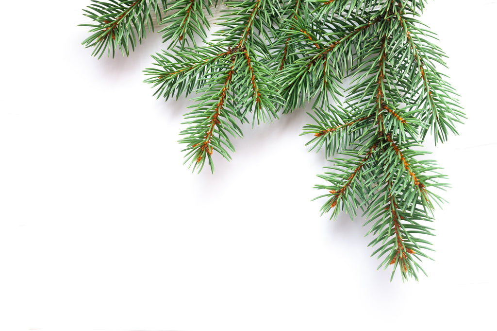fir essential oil