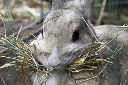 Say 'hey' to HAY! - Why Small Critters Need Hay In Their Diet