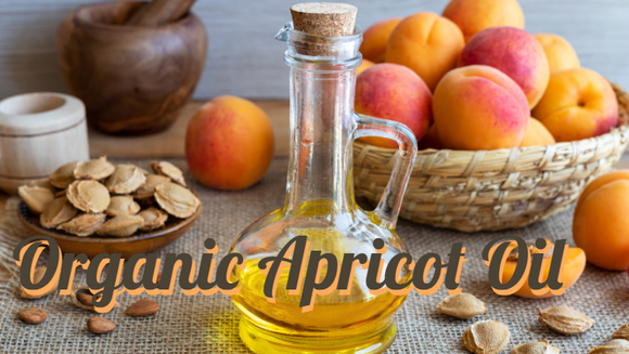 Zongle Therapeutics Organic Apricot Oil
