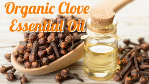 Organic Clove Essential Oil