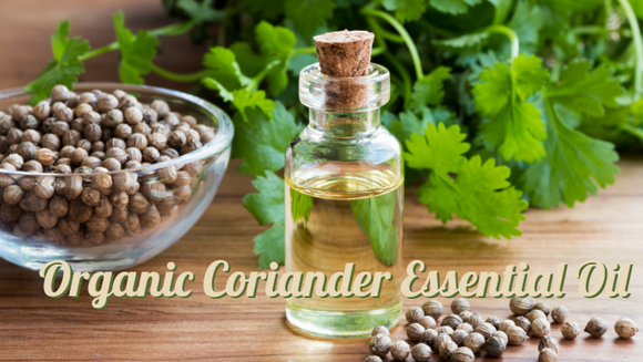 Zongle Therapeutics Organic Coriander Essential Oil