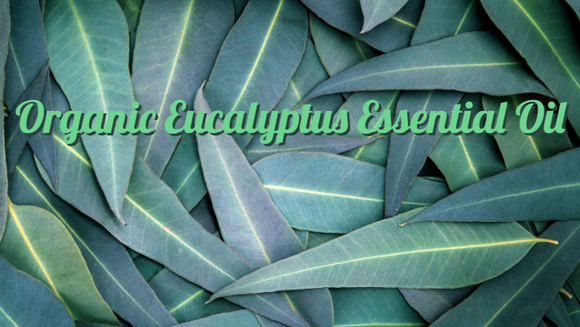 Zongle Therapeutics - Organic Eucalyptus Essential Oil