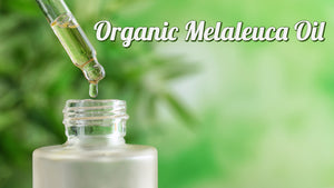 Organic Melaleuca (Tea Tree) Oil