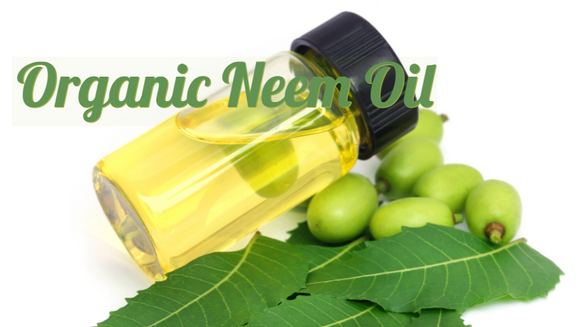 Zongle Therapeutics Organic Neem Oil