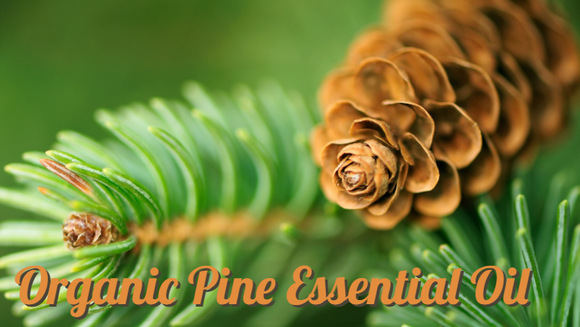 Zongle Therapeutics Organic Pine Essential Oil