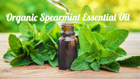Zongle Therapeutics Organic Spearmint Essential Oil