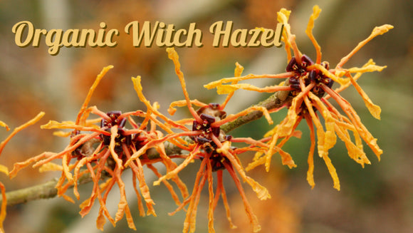Zongle Therapeutics - Organic Witch Hazel
