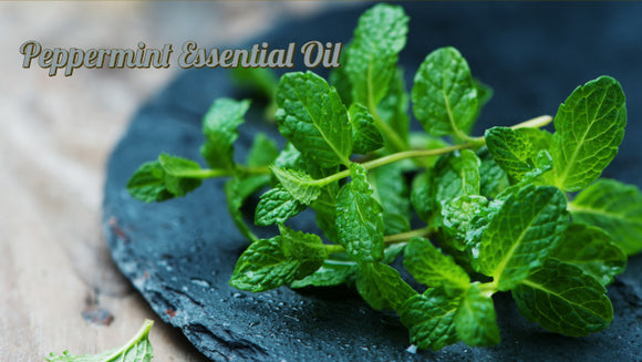 Zongle Therapeutics - Peppermint Essential Oil