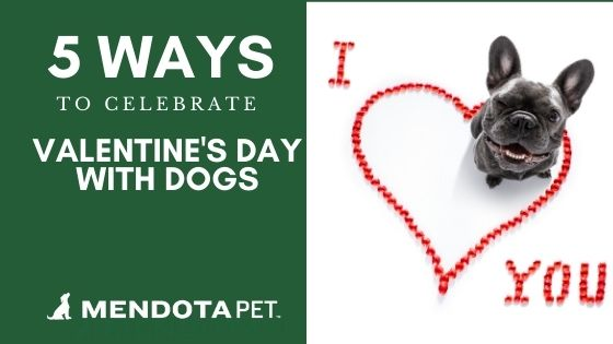 5 Ways to Celebrate Valentine's Day with Dogs