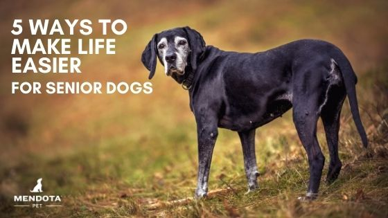 5 Ways to Make Life Easier for Senior Dogs