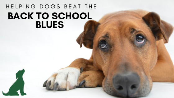 Helping Your Dog Beat the Back to School Blues