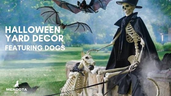 Halloween Yard Decor Featuring Dogs