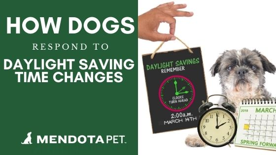 How Daylight Savings Time Impacts Your Dogs