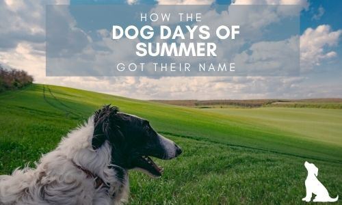How the Dog Days of Summer Got Their Name