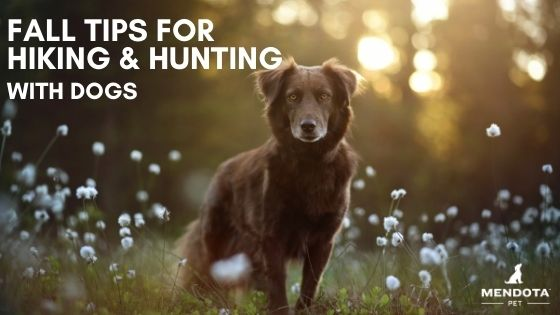 Tips for Hunting or Hiking with Dogs in Fall