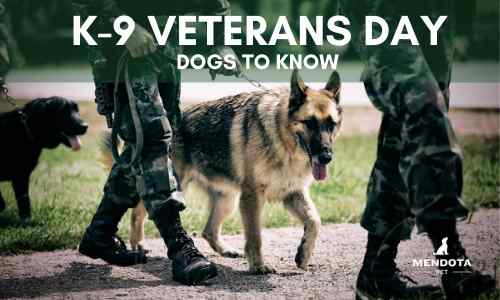 K-9 Military Dogs You Should Know on K-9 Veterans Day
