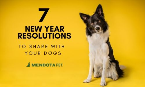 7 New Year Resolutions to Share with Your Dog