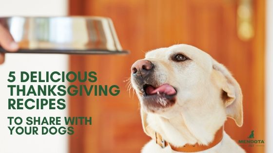 5 Delicious Thanksgiving Recipes To Share with Dogs