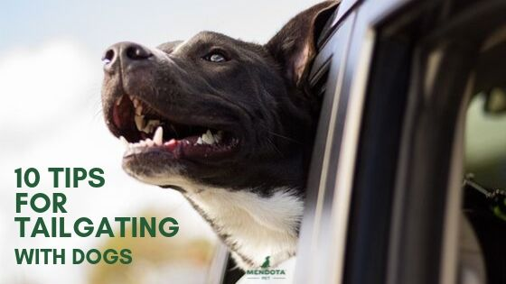 10 Tips for Tailgating with Dogs