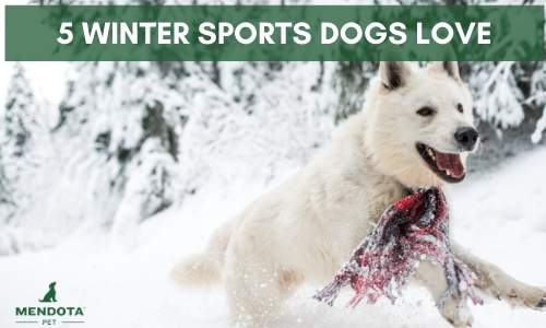 5 Winter Sports Dogs will Love