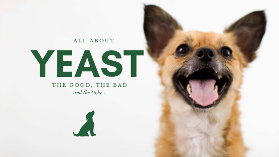 All About Yeast in Dogs