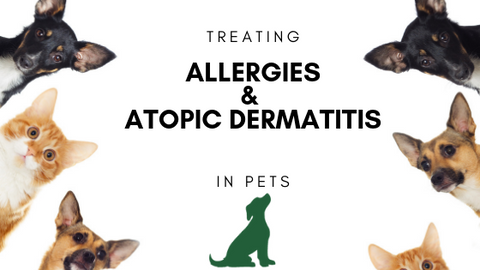 allergies and atopic dermatitis in pets