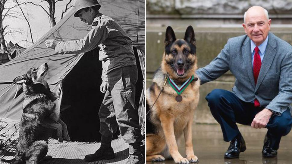 German shepherd mix Chips, seen at left getting a treat during WWII, was honored with a medal