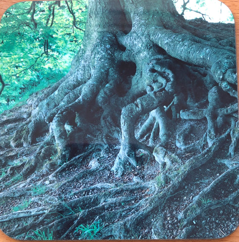 Avebury Beech Tree Roots Coaster