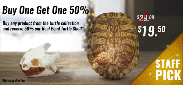 BOGO 50% Turtle Collection