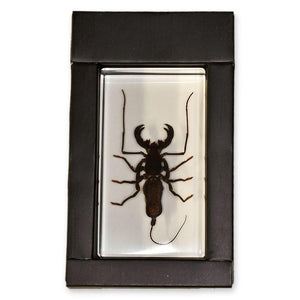 Real Whip Scorpion Paperweight