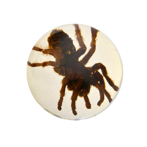 Real Glow in the Dark Tarantula Dome Paperweight (Small)