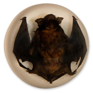 Real Acrylic Bat Dome