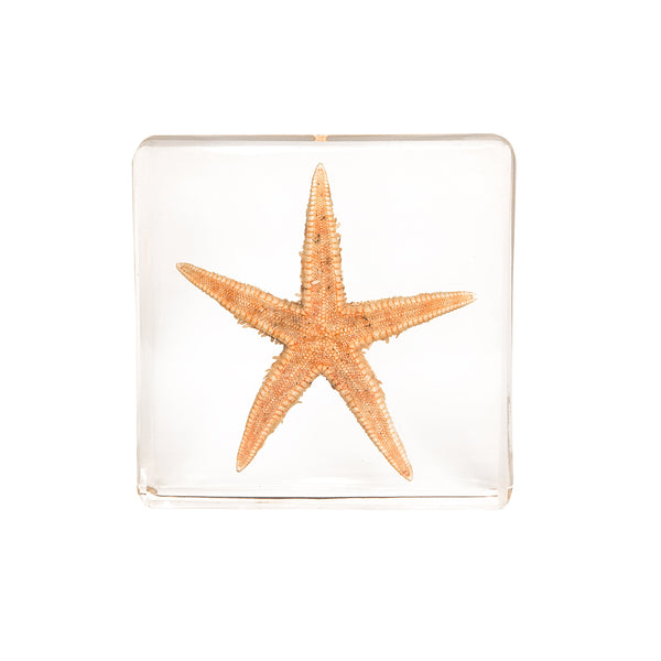 Real Acrylic Starfish Paperweight