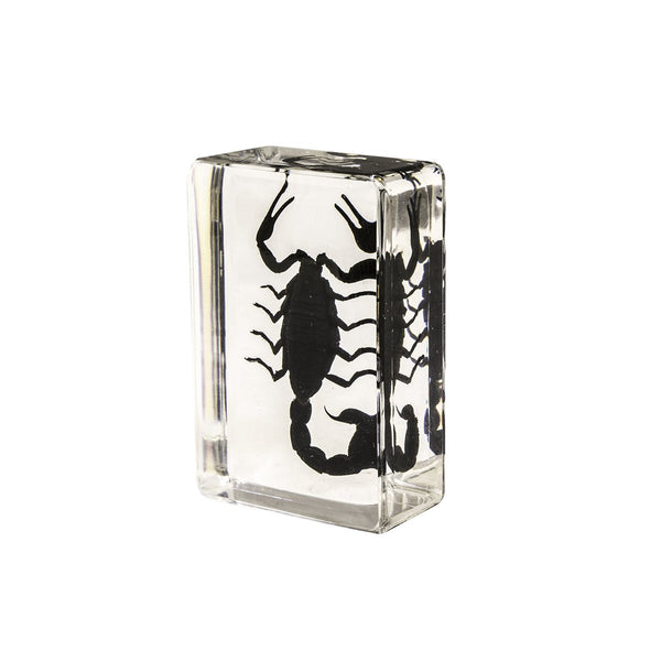 Real Acrylic Black Scorpion Paperweight - (Small)
