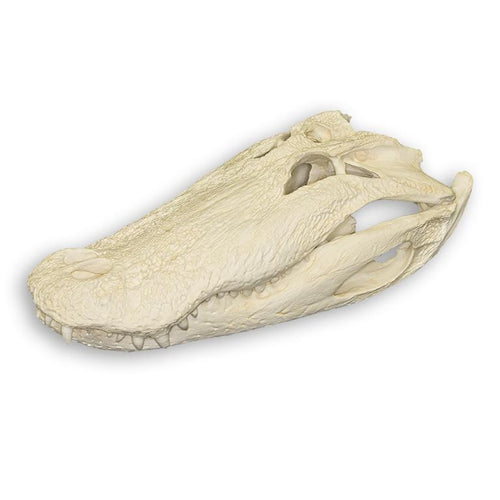 Replica American Alligator (26 in.)