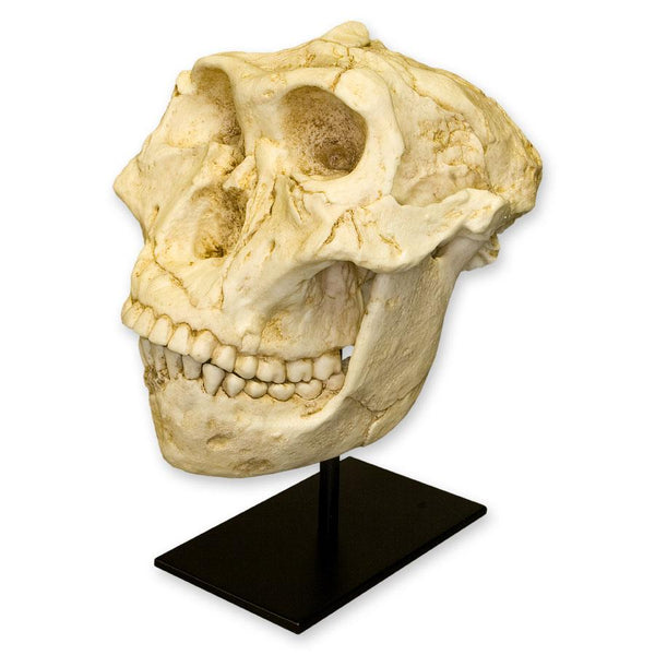 Replica SK-48 Skull and Jaw