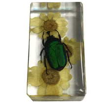 Real Green Rose Chafer Beetle W/ Flower