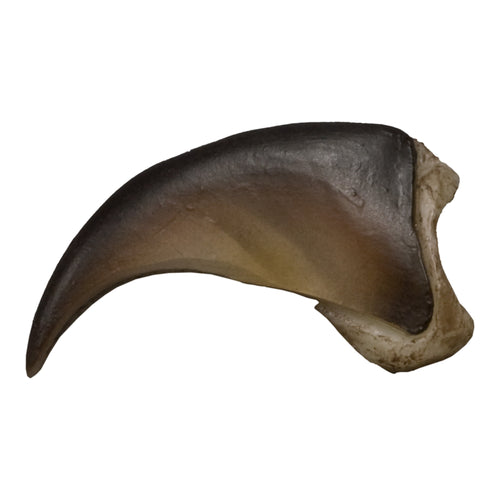 Replica American Black Bear Claw, Small (2.5cm)