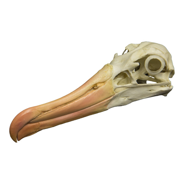 Replica Black-browed Albatross