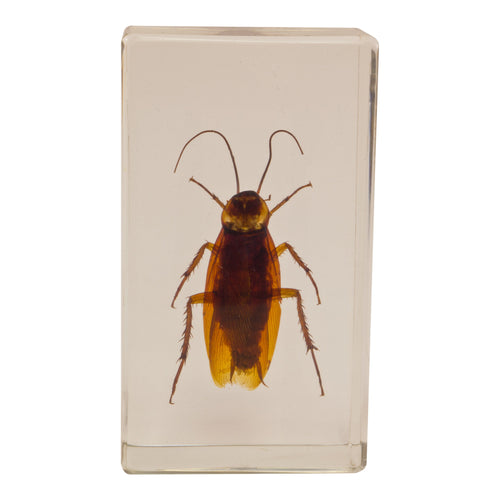 Real Acrylic Paperweight with Bugs Cockroach