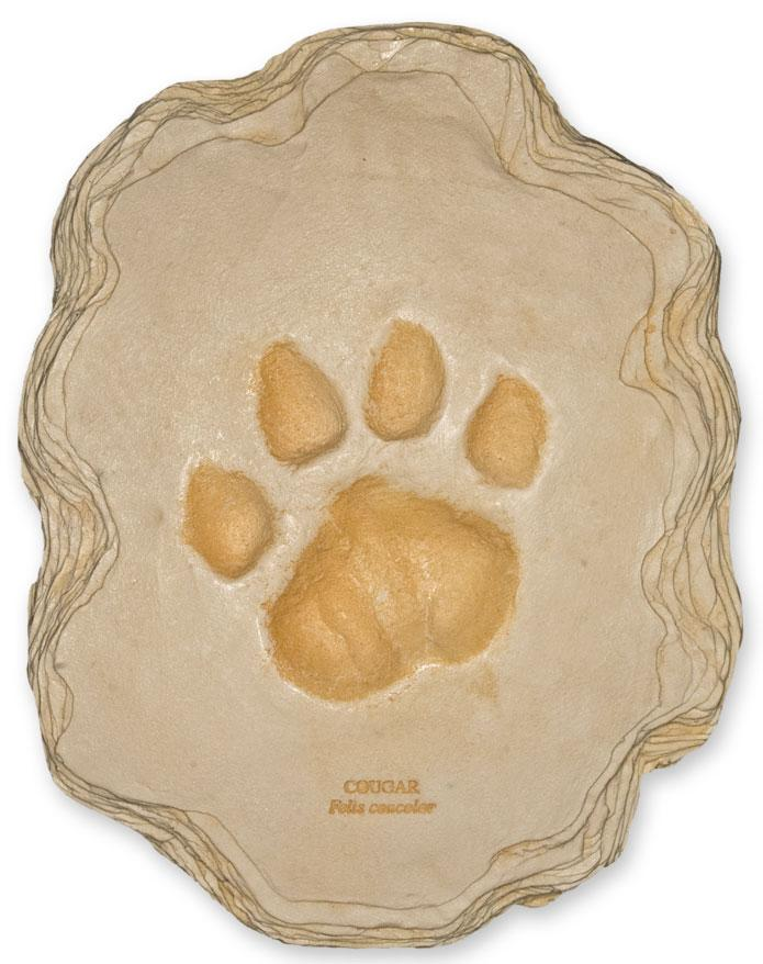 mountain lion footprint 22 5x17 5cm for sale skulls unlimited