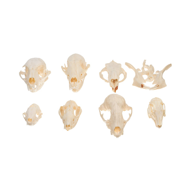 Real Bag-O-Mammal Skulls