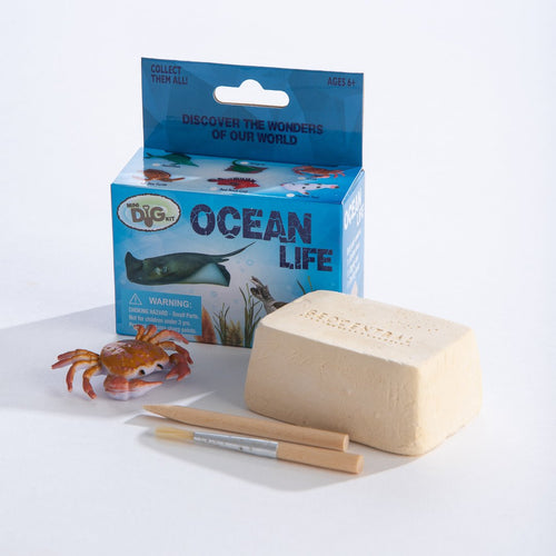 Ocean Life Mini Excavation & Assembly Kit
