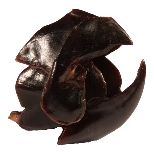 Replica Giant Squid Beak