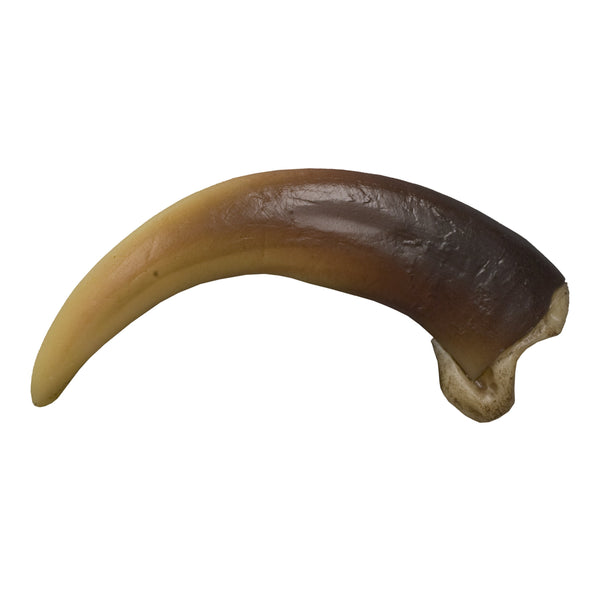 Replica Grizzly Bear Claw (Curved), Large (11.5cm)