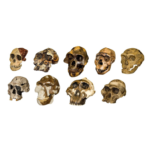 Replica HominidSet of Nine