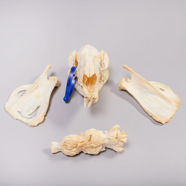 4D Anatomy Model Collection
