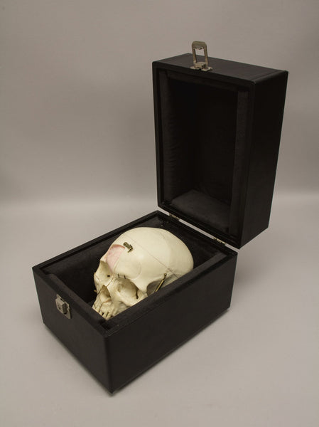 Real Dissected Real Human Skull With Carrying Case