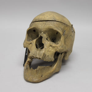 Real Antique Human Skull