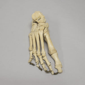 Real Human Foot Set - (Articulated)